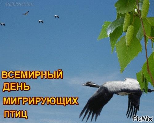 Лучшие фото на день мигрирующих птиц004