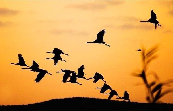 Лучшие фото на день мигрирующих птиц005