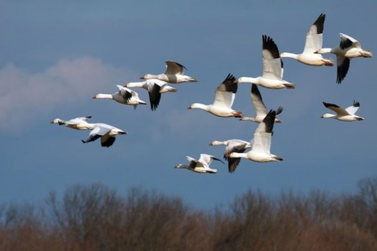 Лучшие фото на день мигрирующих птиц006
