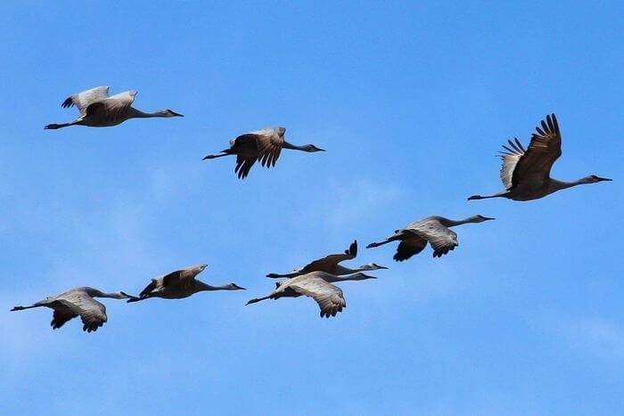 Лучшие фото на день мигрирующих птиц007
