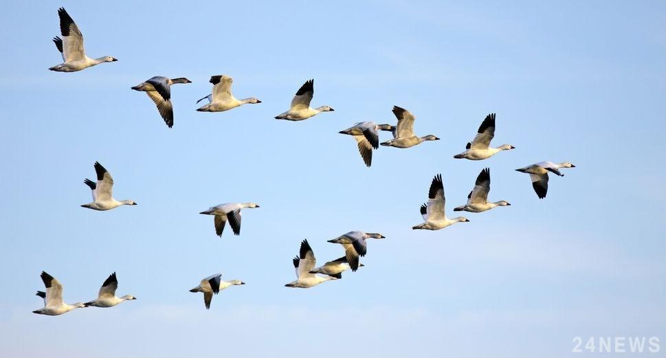 Лучшие фото на день мигрирующих птиц008