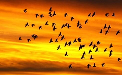 Лучшие фото на день мигрирующих птиц009