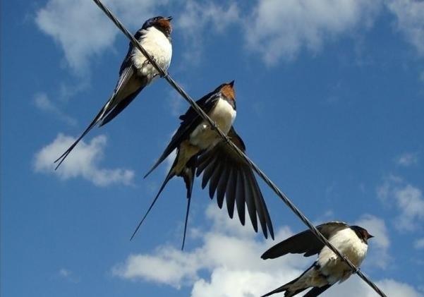 Лучшие фото на день мигрирующих птиц010