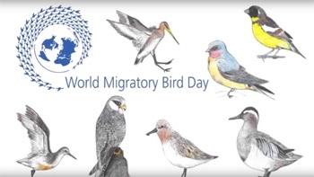 Лучшие фото на день мигрирующих птиц011