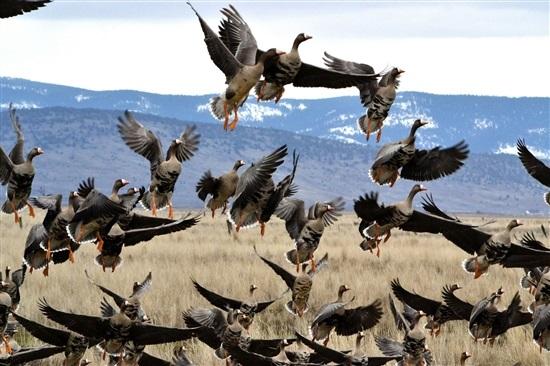 Лучшие фото на день мигрирующих птиц012
