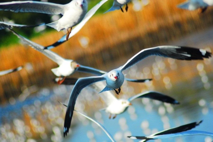 Лучшие фото на день мигрирующих птиц013