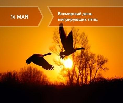 Лучшие фото на день мигрирующих птиц014