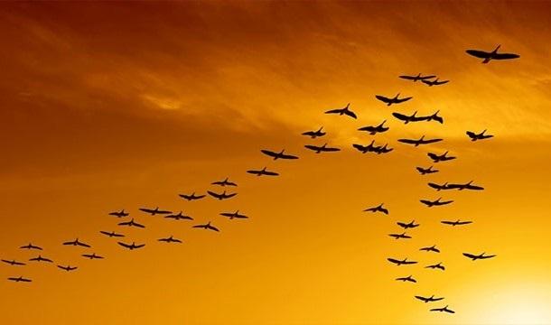 Лучшие фото на день мигрирующих птиц015