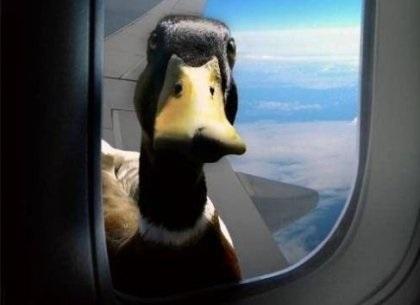 Лучшие фото на день мигрирующих птиц017