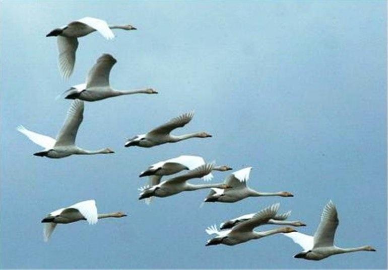 Лучшие фото на день мигрирующих птиц018