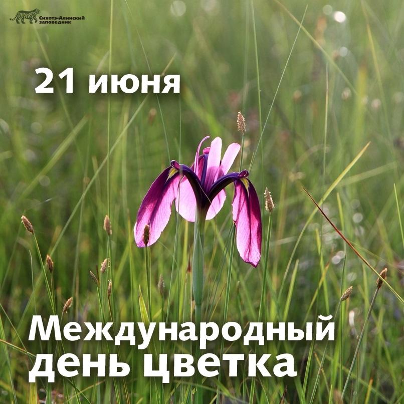 Международный день Цветка 001