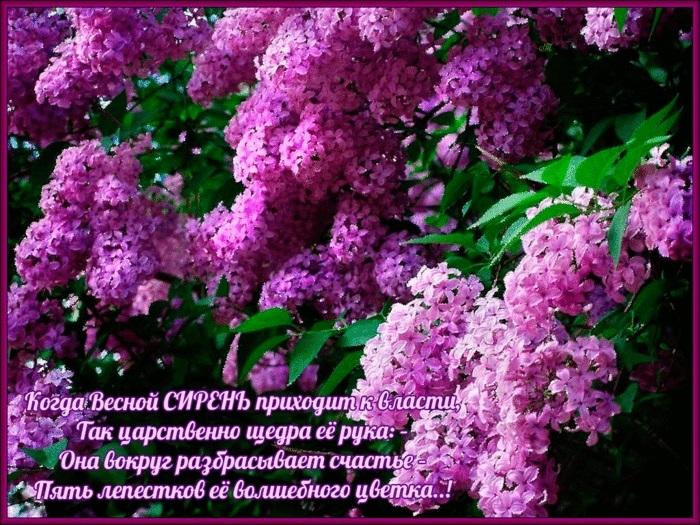 Международный день Цветка 002