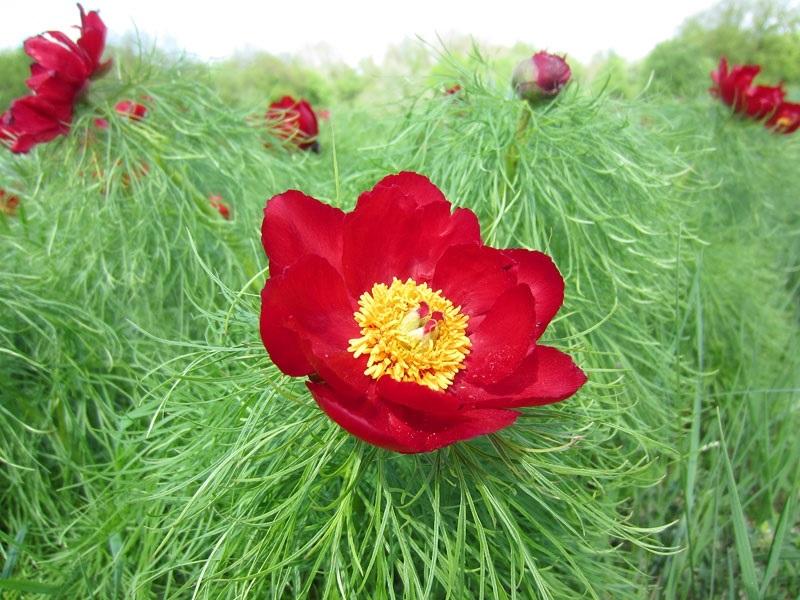 Международный день Цветка 003
