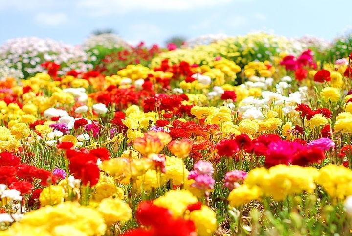 Международный день Цветка 004