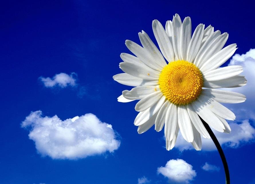 Международный день Цветка 005
