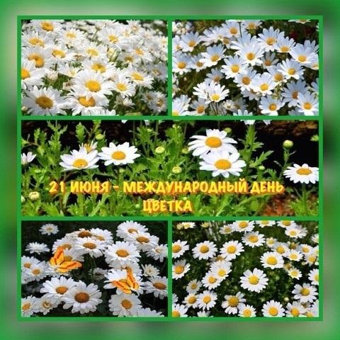 Международный день Цветка 008
