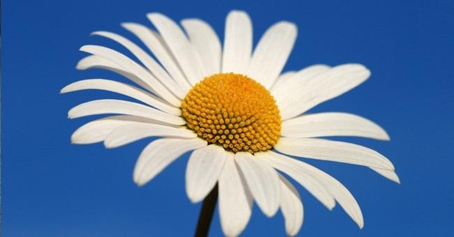Международный день Цветка 014