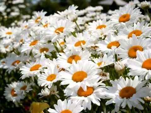 Международный день Цветка 015