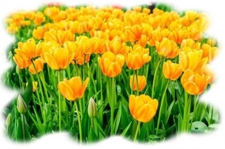 Международный день Цветка 016