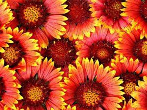 Международный день Цветка 018