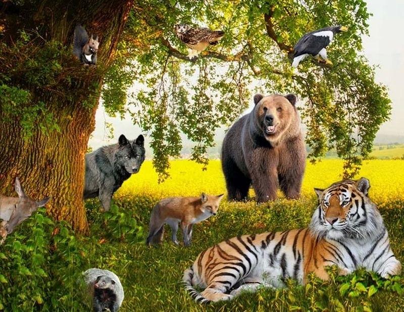 Международный день биологического разнообразия 001
