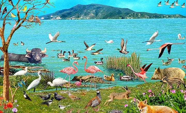 Международный день биологического разнообразия 004