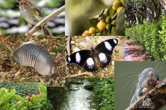Международный день биологического разнообразия 009