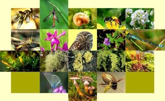Международный день биологического разнообразия 013