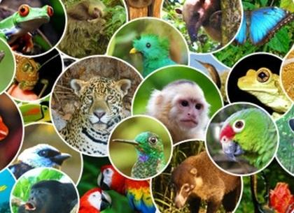 Международный день биологического разнообразия 014