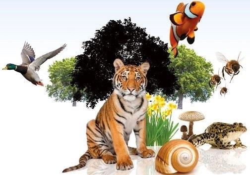 Международный день биологического разнообразия 018