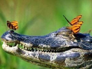 Международный день биологического разнообразия 020