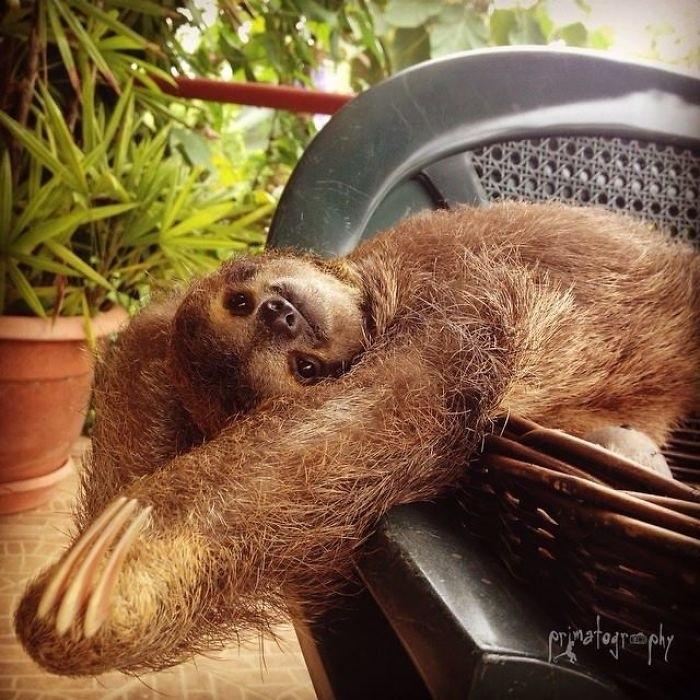 Картинка ленивца смешная