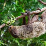 Картинки на Международный день ленивца (International Sloth Day)