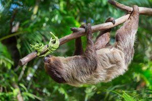 Международный день ленивца (International Sloth Day) 027