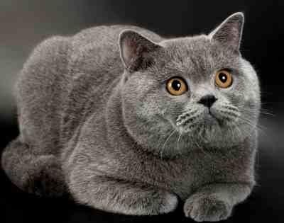 Национальный день кошек в США 001