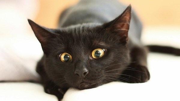 Национальный день кошек в США 002