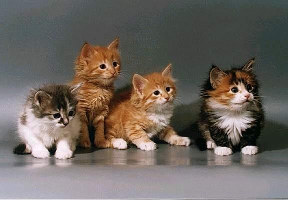 Национальный день кошек в США 003