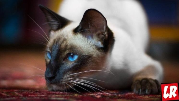 Национальный день кошек в США 004