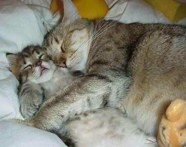 Национальный день кошек в США 005