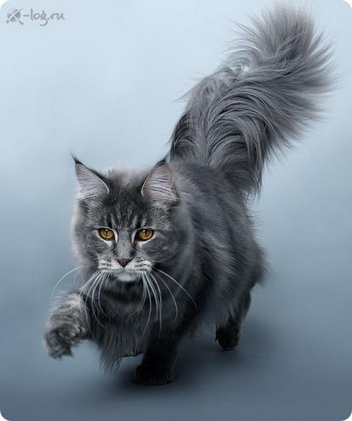 Национальный день кошек в США 006