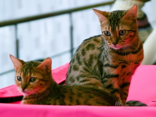 Национальный день кошек в США 008
