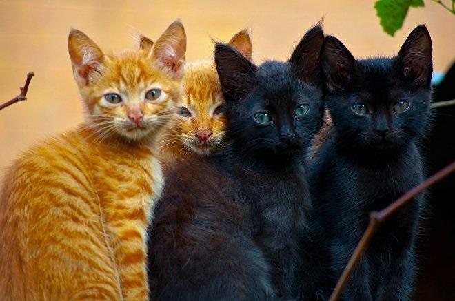 Национальный день кошек в США 010