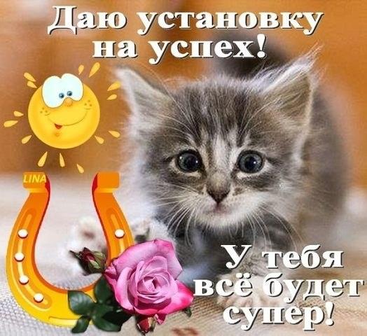 Национальный день кошек в США 011