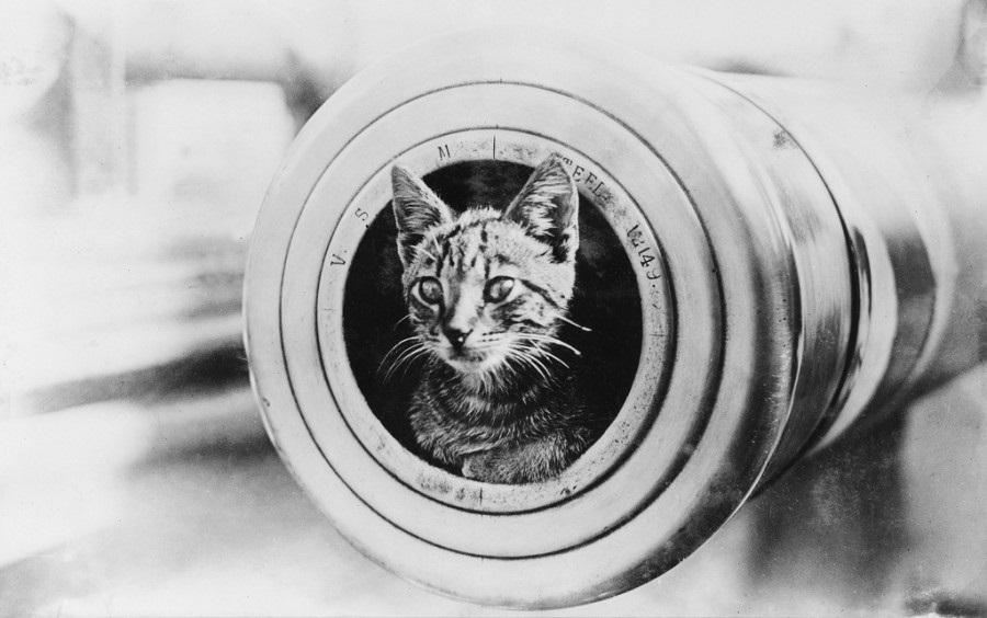 Национальный день кошек в США 013