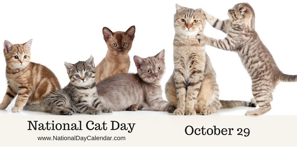 Национальный день кошек в США 014