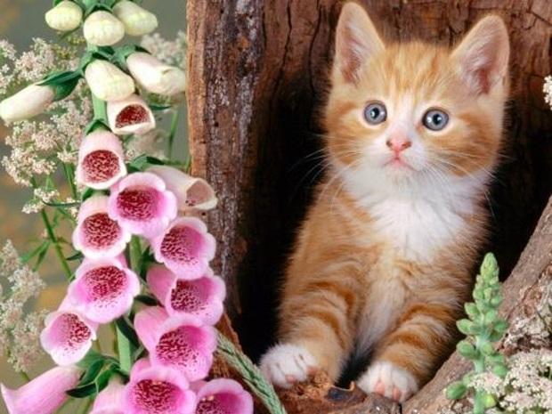 Национальный день кошек в США 015