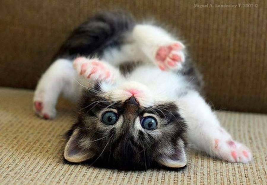 Национальный день кошек в США 016