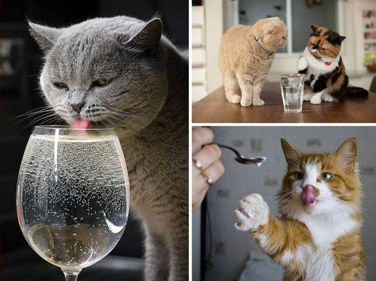 Национальный день кошек в США 017