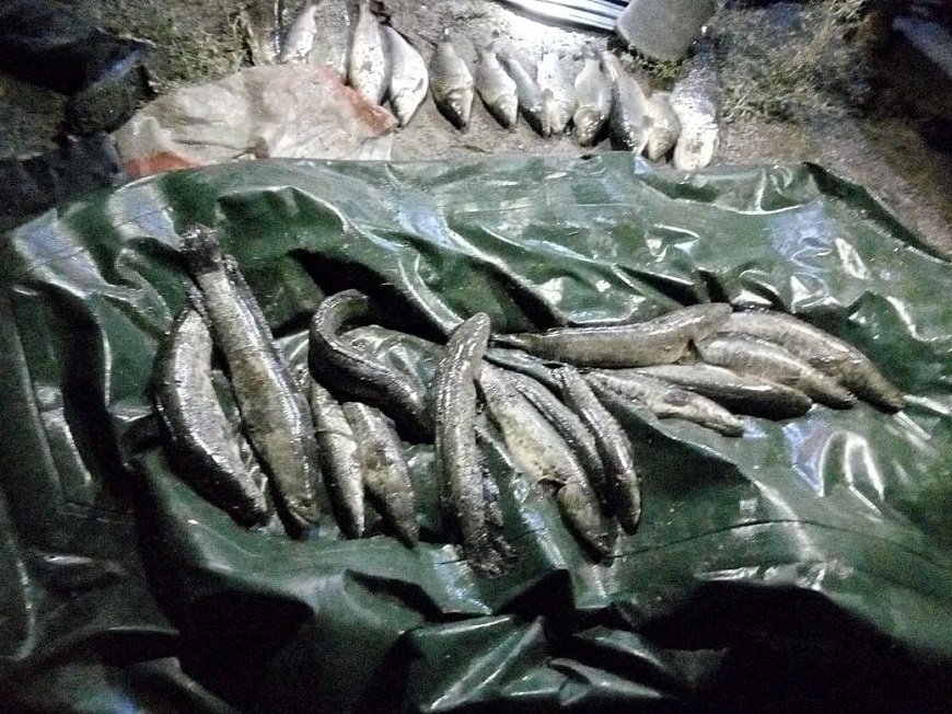 Национальный день сардин (National Sardines Day) (США) 003