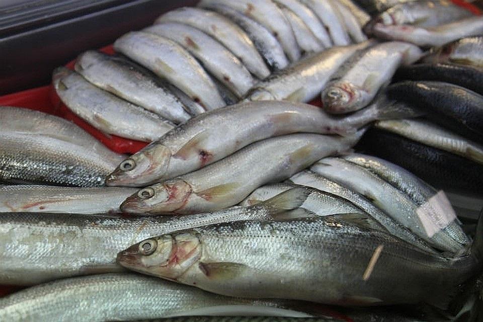 Национальный день сардин (National Sardines Day) (США) 004